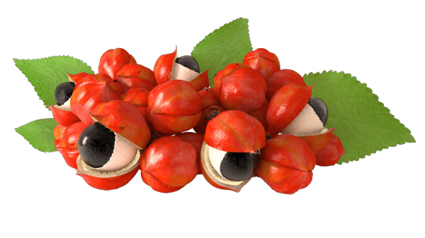 GUARANA - Bonomelli