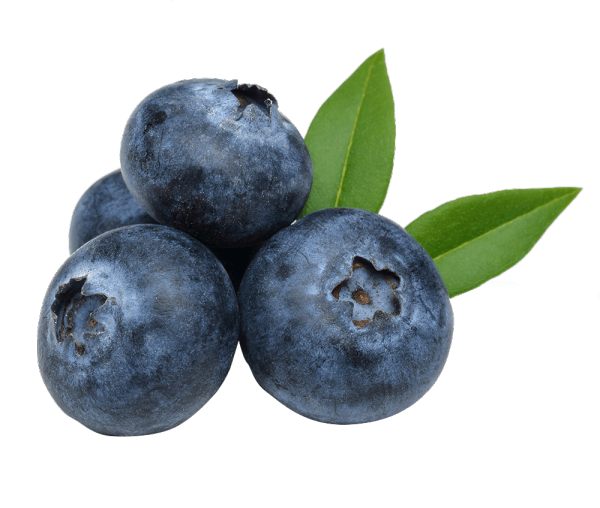 BLUEBERRY - Bonomelli