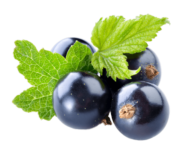 BLACKCURRANT - Bonomelli
