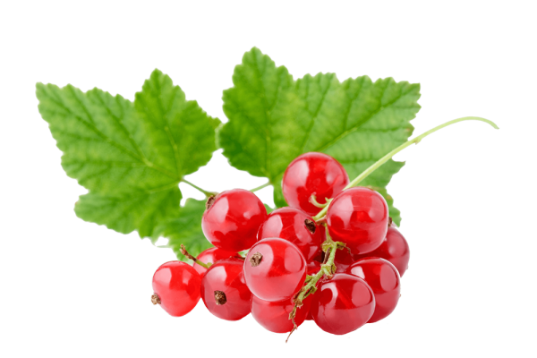RED CURRANT - Bonomelli
